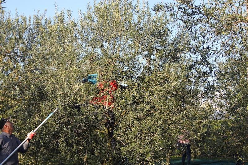 Agriturismo casale degli ulivi