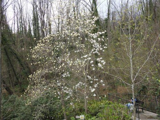Giardino Lucio Viatori Primavera 2017 - 4
