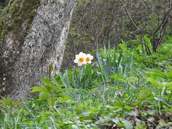 Giardino Viatori Primavera 2017 - 10