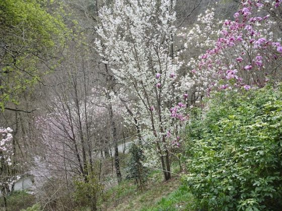 Giardino Lucio Viatori Primavera 2017 - 12