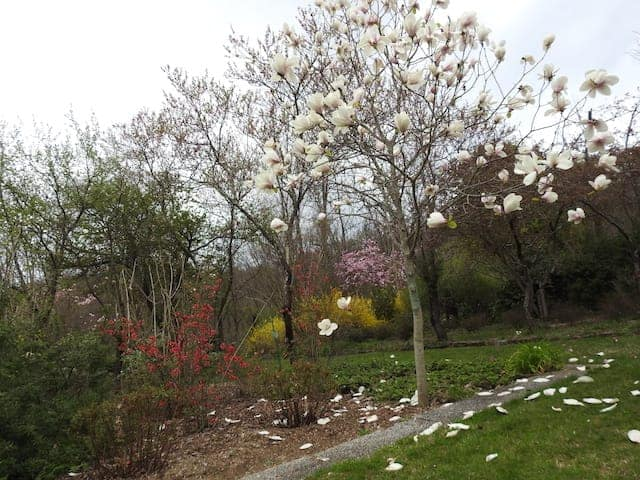 Giardino Lucio Viatori Primavera 2017 - 29