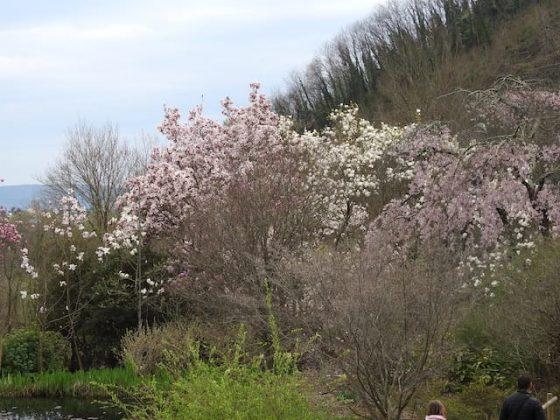 Giardino Lucio Viatori Primavera 2017 - 32