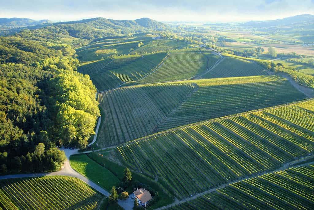 I vini di Cividale e la zona DOC dei Colli Orientali del Friuli • Vimado