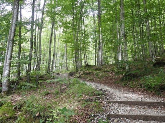 Sentiero per il Fontanone di Goriuda
