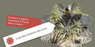 Carsiana botaniske have