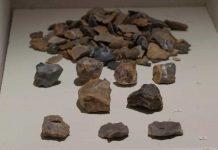 fossili neolitico cividale