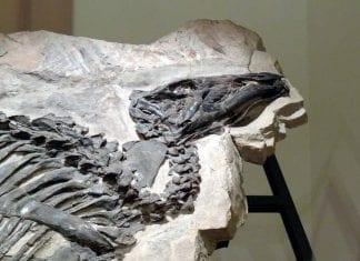 Museo di storia naturale di Trieste