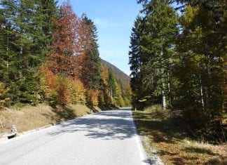Tarvisio forest