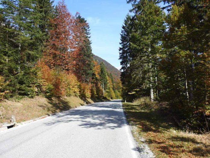 foresta di Tarvisio
