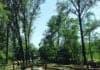bosco romagno