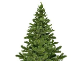 Dove comprare l'albero di Natale